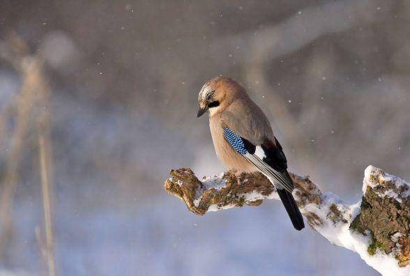 У Кам'янці - Подільському 15 січня буде прохолодно