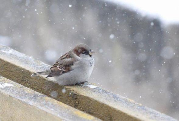 На вівторок 21 лютого кам'янчанам прогнозують сніг