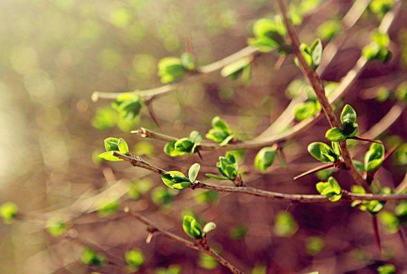 Кам'янчанам 21 березня обіцяють потепління