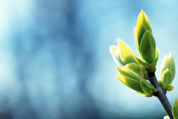 Якою погоду синоптики бачать у Кам'янці 4 квітня?
