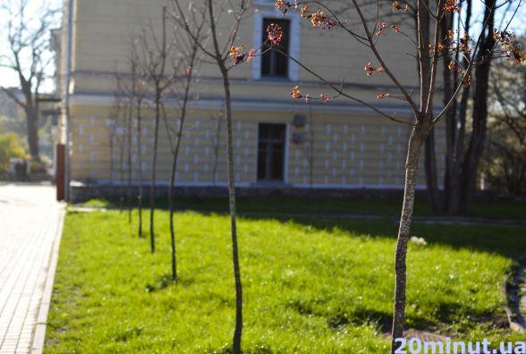 Зелений Кам'янець: де у місті планують висадити саджанці та скільки це коштуватиме?