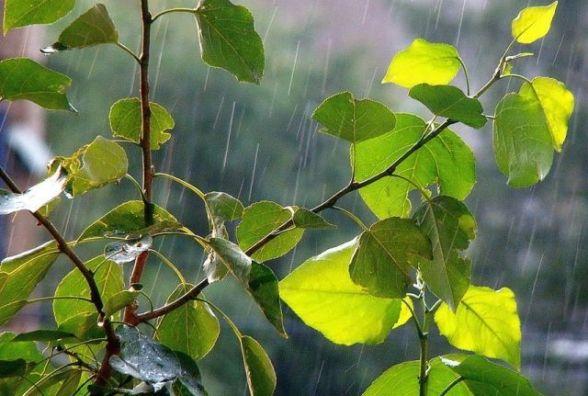 Прогноз погоди у Кам'янці - Подільському - 14 травня