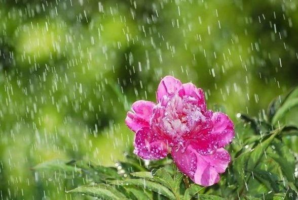 Прогноз погоди у Кам'янці - Подільському: 26 травня