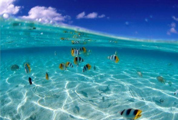 8 червня - Всесвітній день океанів