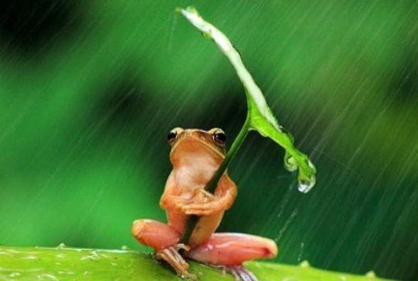 21 червня: прогноз погоди у Кам'янці