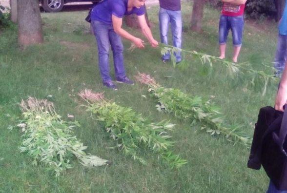 Понад 100 кущів: у Кам'янці затримали жінку, котра на городі вирощувала коноплю (ФОТО)