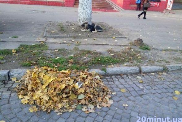 Що робити кам`янчанам з опалим листям?
