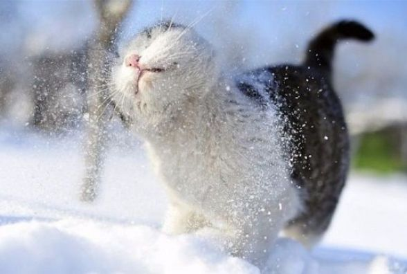 Мороз та дрібний сніг. Якою буде погода у Кам'янці 5 лютого?