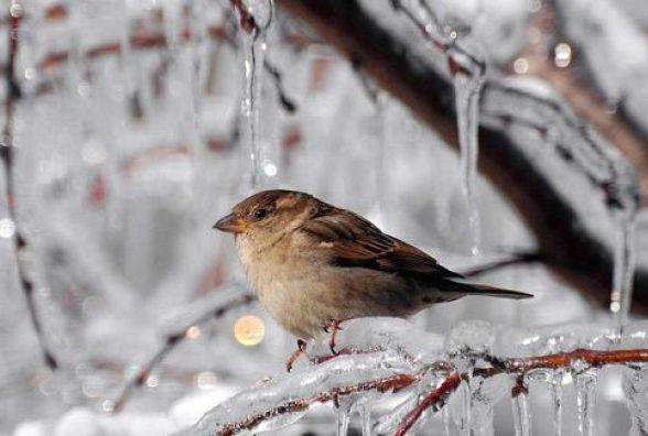 Синоптики прогнозують на 26 лютого сильний мороз. Про погоду у Кам'янці
