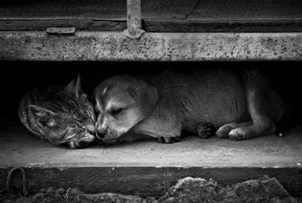 Організація із Кам'янця на стерилізацію та відлов безпрутильних тварин виграла 125 тисяч гривень