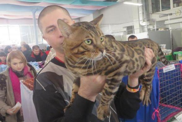 У Кам'янці вперше відбудеться Національна виставка котів