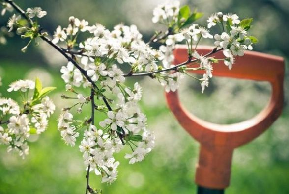 Прогноз погоди у Кам'янці на 13 квітня