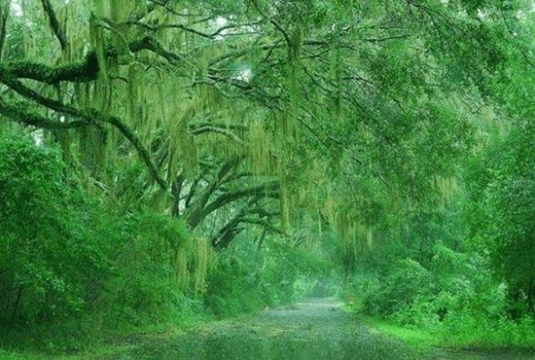 Дощ та похолодання. Прогноз погоди у Кам'янці на вихідні