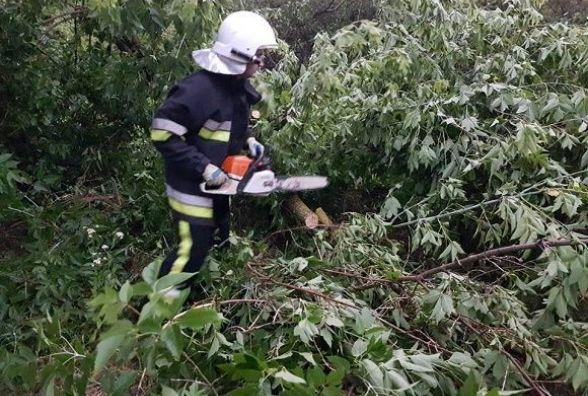 На Кам'янеччині гроза повалила дерева на проїжджу частину (ФОТО)