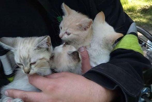У Кам'янці пожежники зняли з дерева чотирьох кошенят (ФОТО)