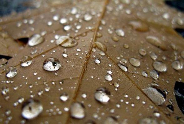 У Кам'янці синоптики прогнозують 17 липня дощ
