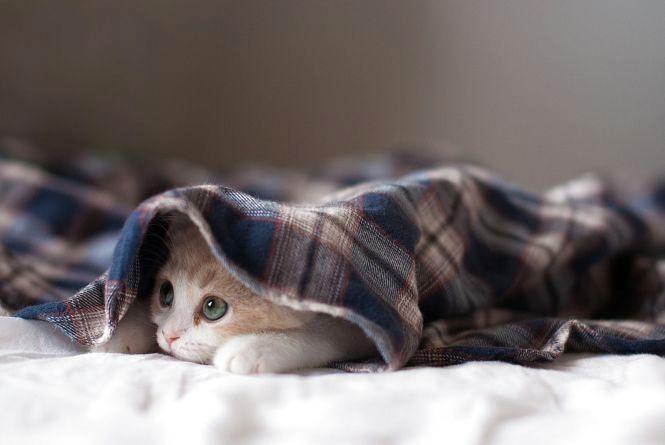 З 6 січня на Кам'янеччині синоптики прогнозують різке похолодання