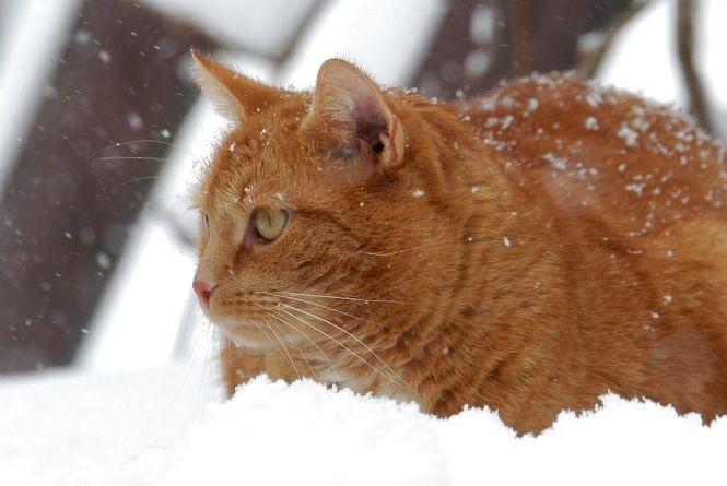 Кам'янчанам варто очікувати сніжної неділі 22-го січня