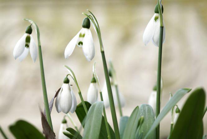 Обіцяють кам'янчанам похолодання вже від 9 березня