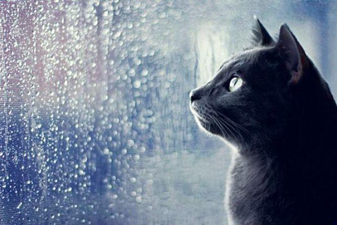 8 березня у Кам'янці дощитиме