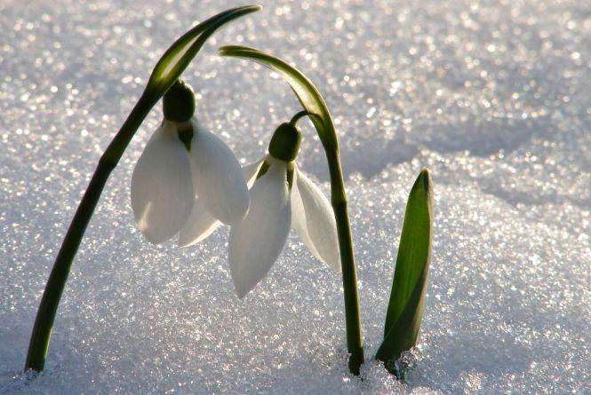 У Кам'янці 18 березня обіцяють сніг!