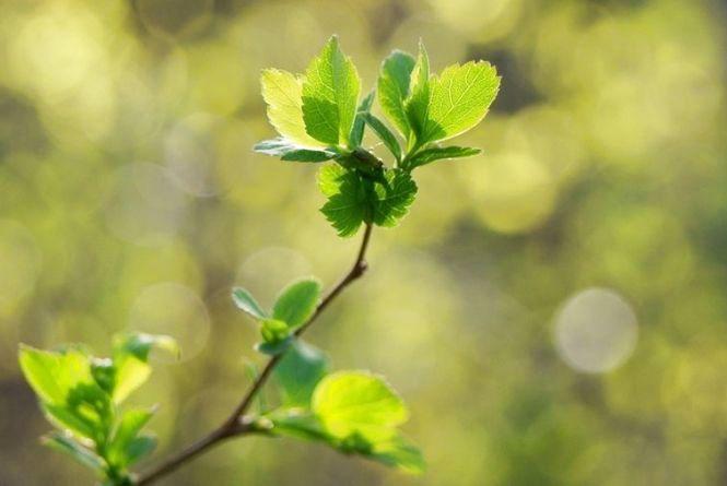 Сонячно і вітряно: якою буде погода у Кам'янці 29 березня?