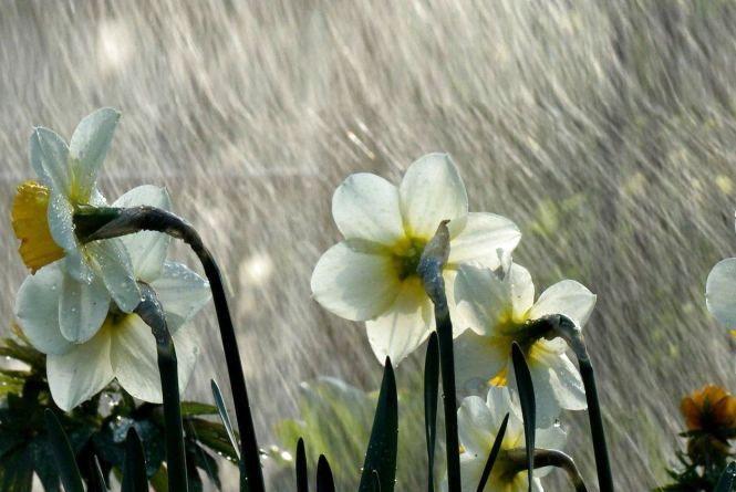 Прогноз погоди у Кам'янці - Подільському. 5 травня