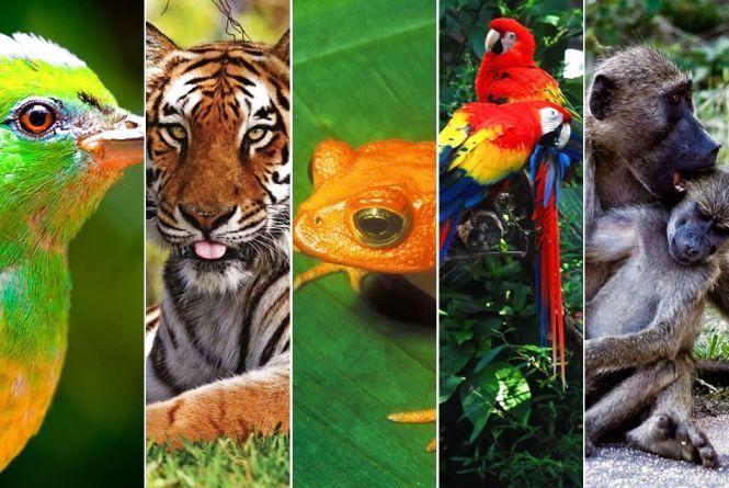 22 травня - Міжнародний день біологічного різноманіття