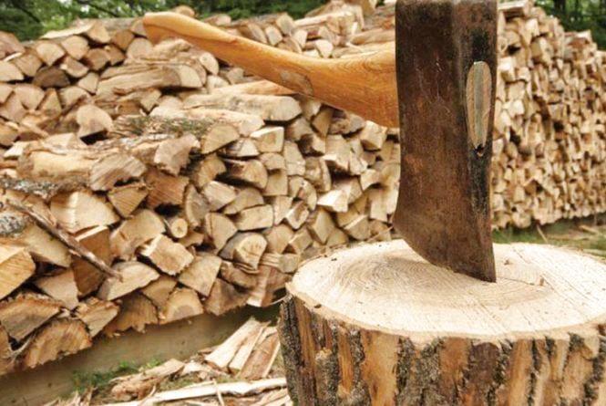 На Кам'янеччині лісничий незаконно продав дерево, що належало комунальному підприємству