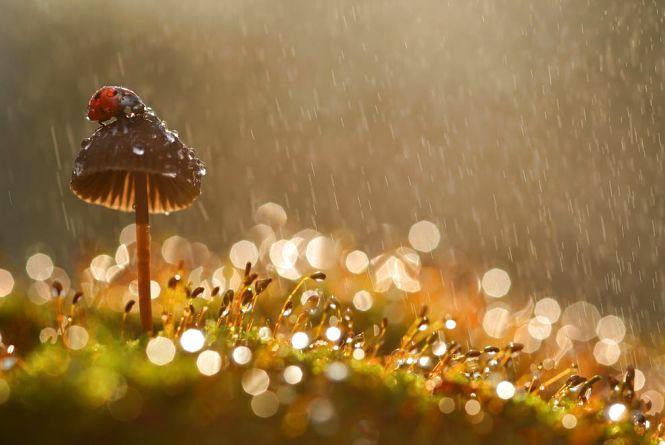 Якою буде погода у Кам'янці цього тижня?