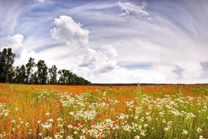 Якою погода буде у Кам'янці 15 липня?