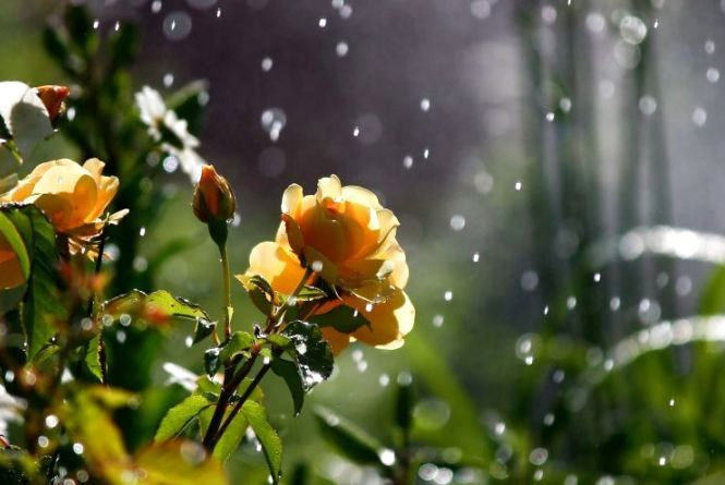 24 липня у Кам'янці буде із дощем?