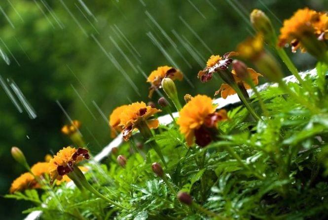 На вихідні кам'янчанам обіцяють дощі