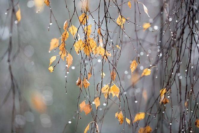 Дощ, сніг, мороз? На яку погоду слід чекати кам'янчанам цього тижня