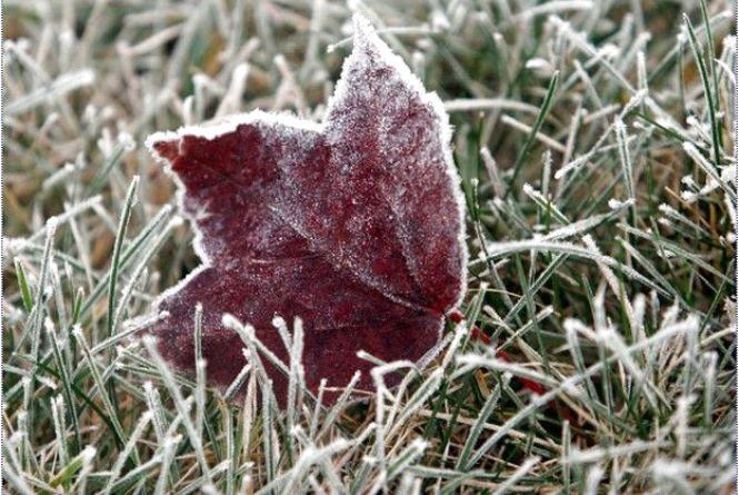 Тиждень у Кам'янці буде морозним та сонячним