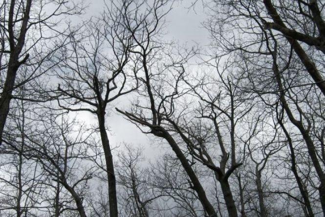 На Кам'янець насувається циклон. Яку погоду прогнозують 5 січня і коли чекати похолодання?