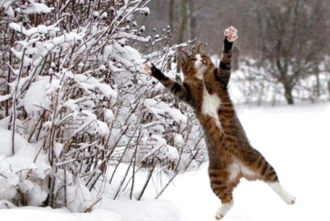 У Кам'янці 26 січня потепліє?