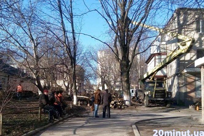 Хто і чому зрізує дерева між будинками у центрі Кам'янця?