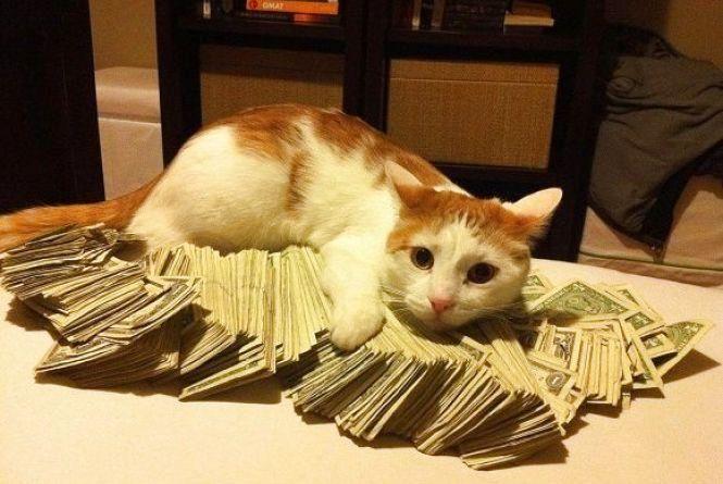 Курс долара знижується: відомості на 15 лютого