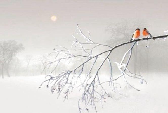 Морози сильнішають: про погоду у Кам'янці 20 лютого