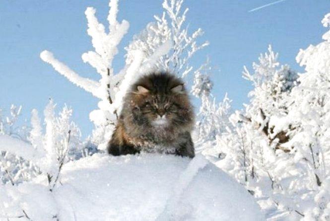 Невелике прояснення і сильний мороз - про погоду в останній день зими