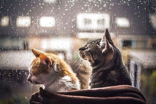 У Кам'янці 12 березня прогнозується дощ