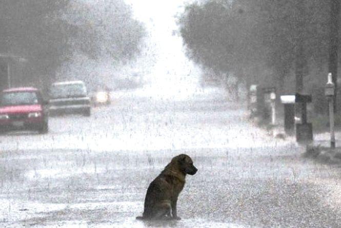 У Кам'янці очікується дощова погода