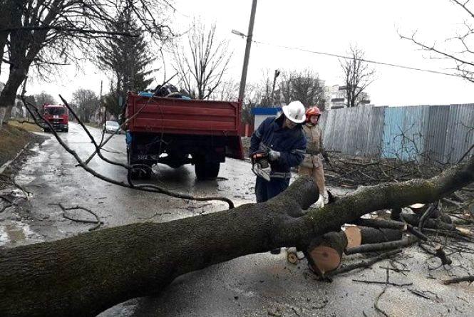 Повалене дерево у Кам'янці на дві години перекрило рух транспорту