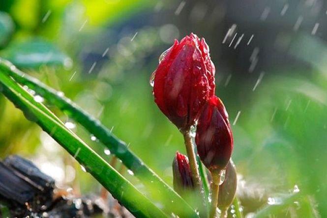 Завтра, 27 квітня, у Кам'янці очікується дощова погода