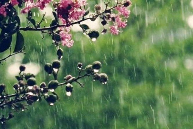 Хмарно та дощ. Прогноз погоди у Кам'янці на 8 травня