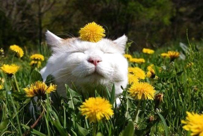 У Кам'янці 10 травня очікується похмура погода, без опадів
