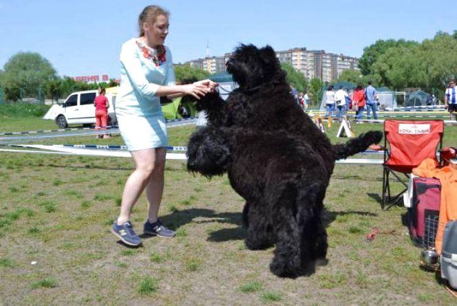 У Кам'янці відбудеться виставка собак усіх порід