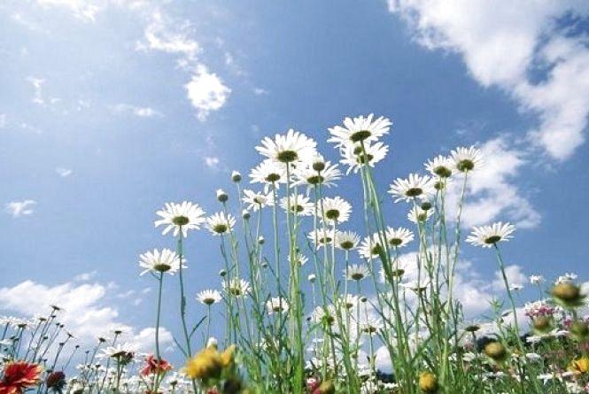 У Кам'янці 29 травня буде хмарно і тепло. Прогноз погоди