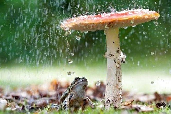 Синоптики обіцяють грозову погоду 13 червня. Прогноз у Кам'янці